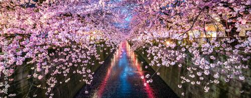 obraz PCV Kirschblüte im Frühling bei Nacht in Nakameguro, Tokio, Japan