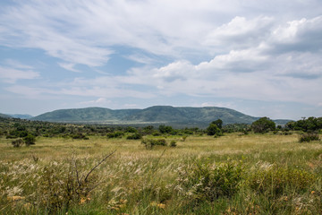 South African savanna during a hot summer day