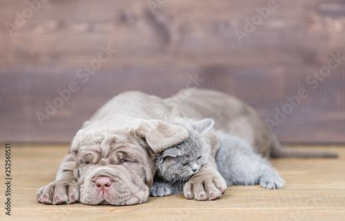 Sleepin puppy hugging tiny kitten on wooden background - 252560531