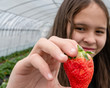 Asian American tween girl holding strawberry