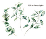 Watercolor seeded eucalyptus set. Hand painted eucalyptus branch and leaves isolated on white background. Floral illustration for design, print, fabric or background. - 252647512