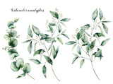 Watercolor seeded and baby eucalyptus set. Hand painted eucalyptus branch and leaves isolated on white background. Floral illustration for design, print, fabric or background. - 252647561