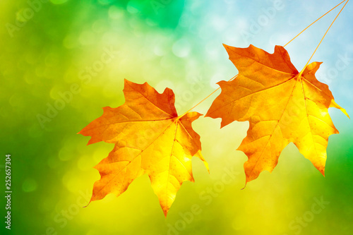 autumn landscape with bright colorful foliage. Indian summer. - 252657304