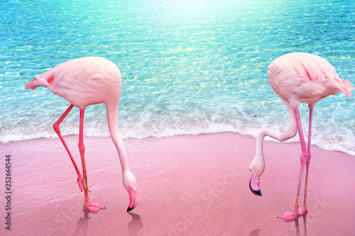 obraz PCV pink flamingo on pink sandy beach and soft blue ocean wave summer concept background