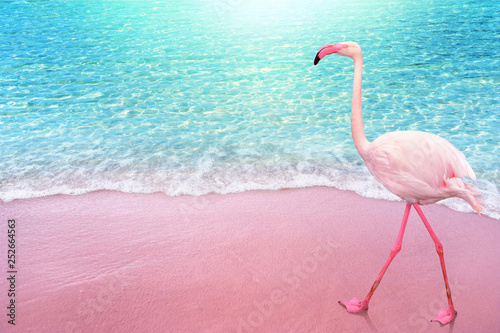 pink flamngo bird sandy beach and soft blue ocean wave summer concept background © ohishiftl