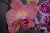 An Orchid of an unusual color.