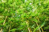 green bamboo tree background