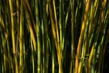 Bambus , Bamboo forest  © wip-studio
