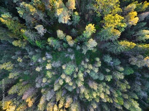 Aerial view of forest during autumn season, Mazury, Poland © Mariusz Świtulski