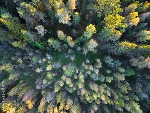 Aerial view of forest during autumn season, Mazury, Poland © Mariusz Świtulski