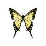Hand drawn yellow swallowtail butterfly - 252869166