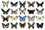 Hand drawn butterflies collection - 252869167
