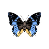Hand drawn butterfly - 252869169