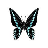 Hand drawn graphium sarpedon butterfly - 252869195
