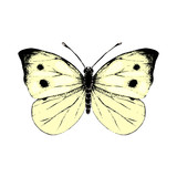 Hand drawn small white butterfly - 252869304