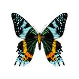 Hand drawn Madagascan Sunset Moth - 252869316