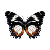 Hand drawn butterfly on white background - 252869317