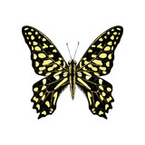 Hand drawn Tailed Jay Butterfly - Graphium agamemnon - 252869333