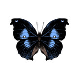 Hand drawn butterfly on white background - 252869357