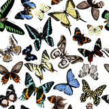 Seamless pattern with hand drawn butterflies - 252869392