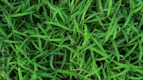 The green leaf nature wallpaper - 252877968