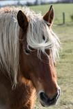 Fototapeta Konie - portrait d'un cheval © PL.TH