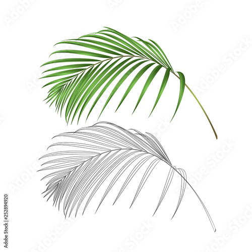 Palm leaf  decoration tropical  plant nature and outline  vintage vector illustration editable hand drawn