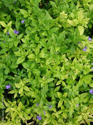 obraz PCV Close up of green leaf