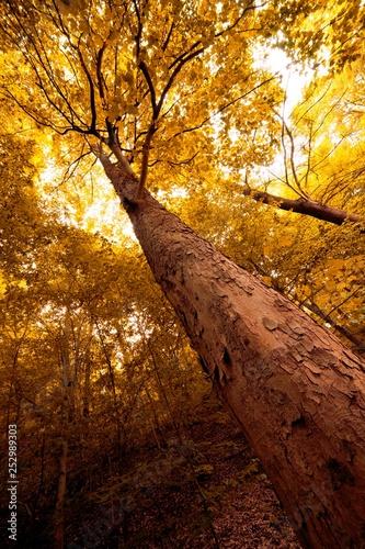 mata magnetyczna orange autumn forest