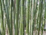Fototapeta Sypialnia - Gravures sur bambous © Fabien