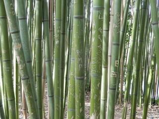 Gravures sur bambous © Fabien