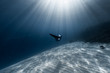 Woman freediver glides in the depth among the school of fish over the sandy bottom with sun rays shining through the water