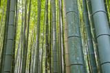 Fototapeta Sypialnia - Bamboo grove forest in Kyoto Japan © Stanislav Komogorov