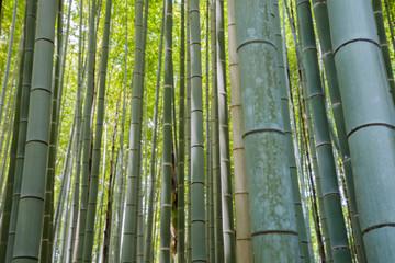 Bamboo grove forest in Kyoto Japan © Stanislav Komogorov