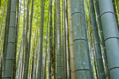 Bamboo grove forest in Kyoto Japan