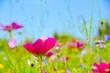 Blumenwiese Hintergrund - Sommerblumen Wiese bunt