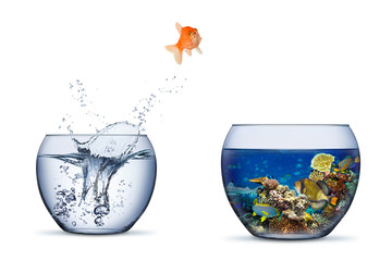 goldfish jump out of bowl into coral reef paradise fish change chance freedom concept isolated background