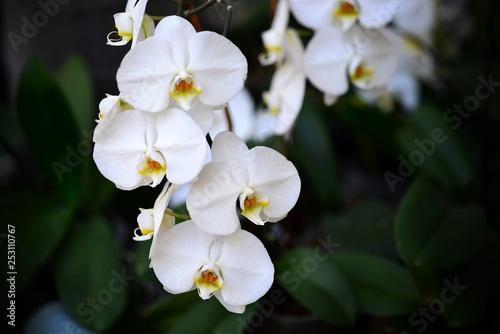 Flowers - 253110767