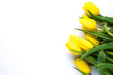 Fototapeta Tulipany - Yellow tulips on white background. The concept of spring or women's day © alekseyliss