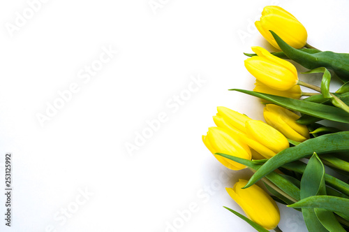 Yellow tulips on white background. The concept of spring or women's day - 253125992
