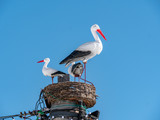 Artificial wooden stork birds in the nest with blue sky background