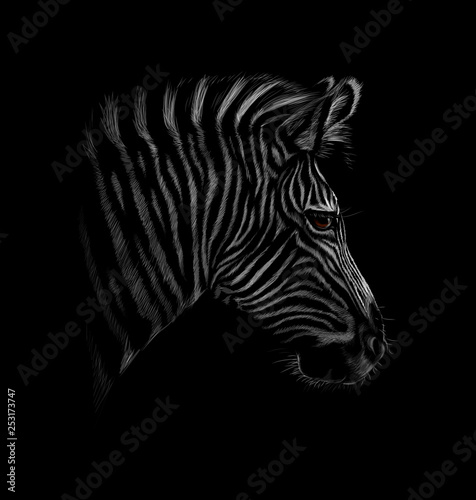 Portrait of a zebra head on a black background - 253173747