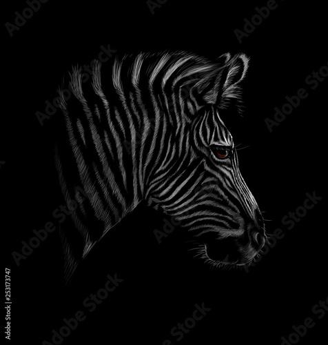 Portrait of a zebra head on a black background