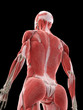 3d rendered medically accurate illustration of a females back muscles