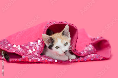 Calico kitten laying inside a pink sequined tree skirt, pink background. - 253207998
