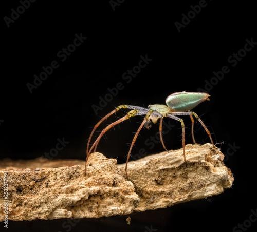 Spider on black Background - 253227799