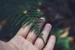 Hand holding green leaf in the nature forest, spring concept