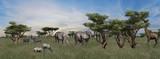 Compilation of various wild animals on African Savanna