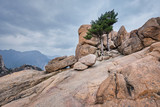 Rock with pine trees in Seoraksan National Park, South Korea