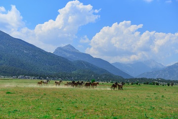 galloping wild horses in nature and wildlife areas